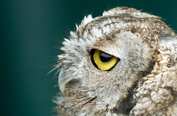 Oregon Zoo Photography...
